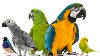 10 Best Parrot Pet Species Pet Comments