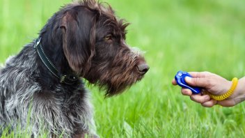 10 Best Dog Training Clickers for 2019 | Pet Comments