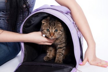 Airplane Approved Pet Carriers