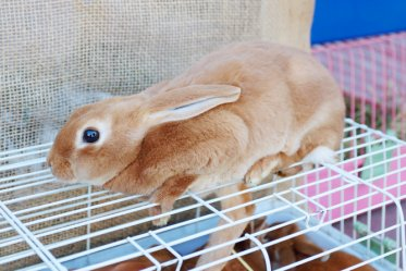 Tips to Keep Rabbit Cage Clean
