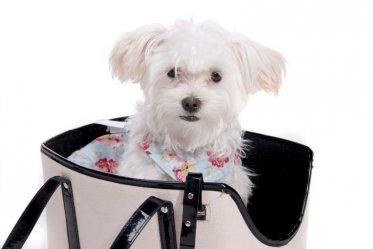 Best Dog Carrier Purses