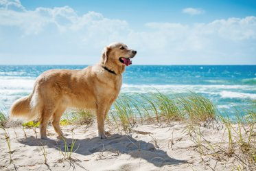 Best Dog Breed for Hot Weather