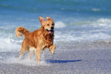 Best Dog Breeds for Beaches