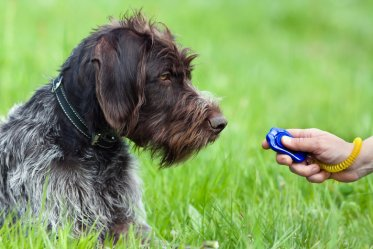 Best Dog Training Clickers