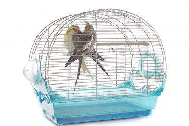 Bird Carriers & Travel Cages