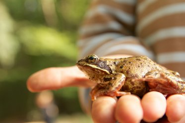 Frog as a Pet