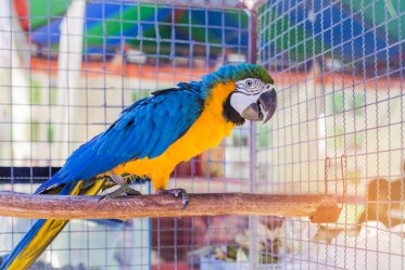 Cages for Macaw