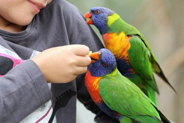 Are Parrots Loyal?