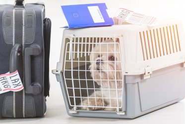 Airline Approved Pet Crate