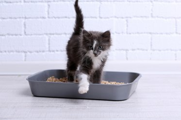 Litter Box Training a Cat