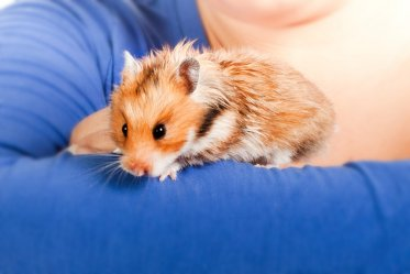 10 Common Hamster Health Problems Owners Should Know About