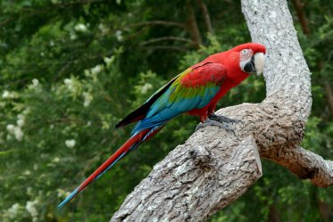 Macaw Pros & Cons