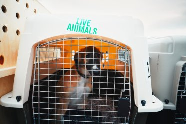 Health Risks for Dog Flying in Cargo
