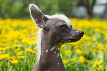 Top 10 Funny Dog Breeds You Would Love to Live With
