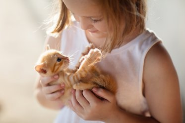Why Cat Best for Kid's First Pet