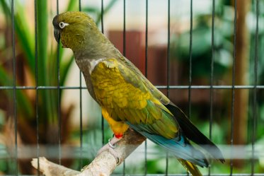 9 Questions Before Adopt a Parrot