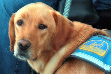 How To Make Your Dog A Service Dog? – Careful With These 4 Steps