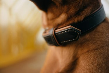 Space between Dog Collar and Neck