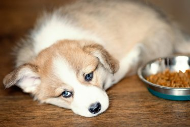 Best Low Fat Dog Foods 2018