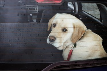 What to do if you find a dog locked in a car during the hot summer