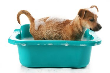 How to Bathe Your Dog the Easy Way