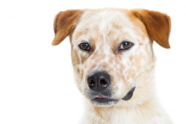 A Dog with Kidney Disease: What Foods to Avoid