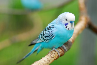 10 Best Bird Pets For Beginners Pet Comments