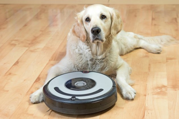 /golden retriever and the robotic vacuum