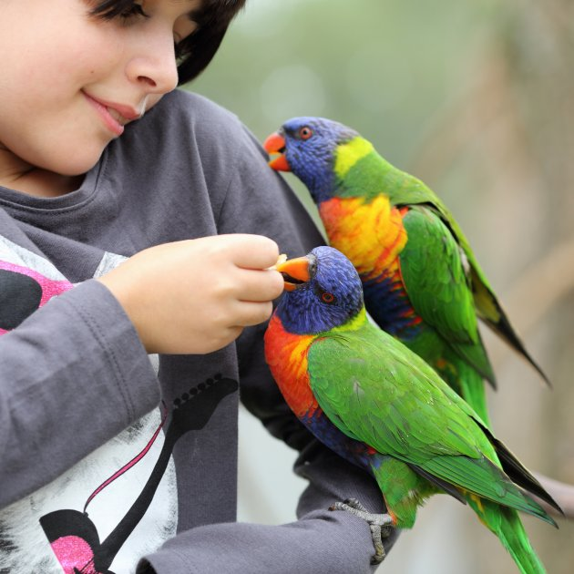 girls and parrots