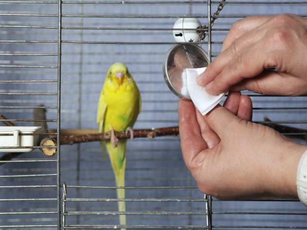 Birdcage without Chemical Cleaners