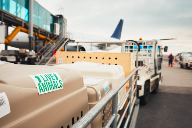 animal airplane cargo