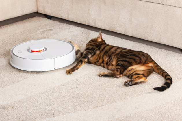 cat near robotic vacuum
