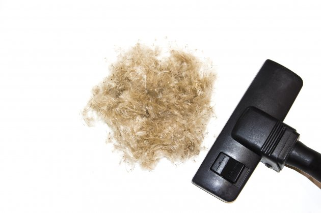 vacuum cleaner and ball of hair