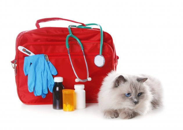first aid kit and cute cat
