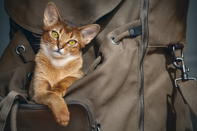 ca9cc465a782 Best Cat Backpacks & Carriers [Updated for 2019]   Pet Comments