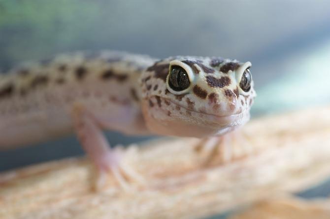Best Leopard Gecko Habitat [Top 5 Terrariums Reviewed] | Pet