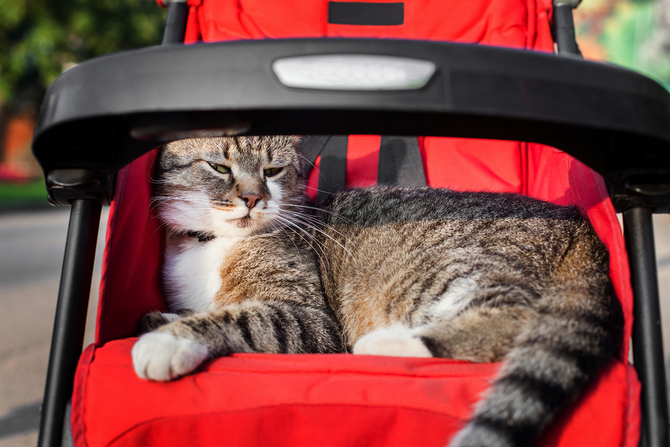 best cat strollers