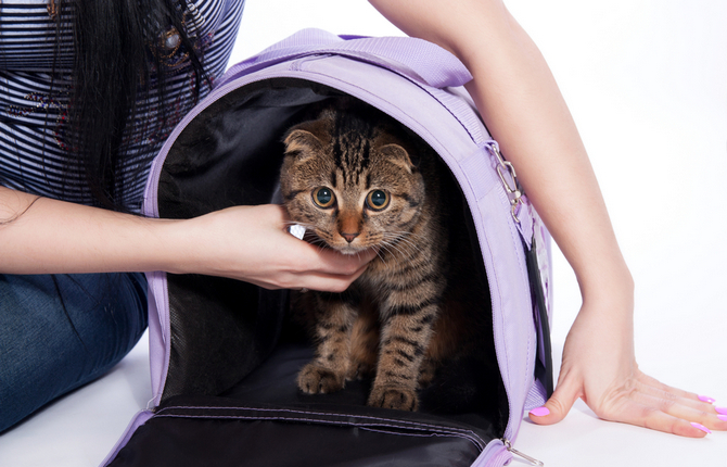 cute cat with travel house