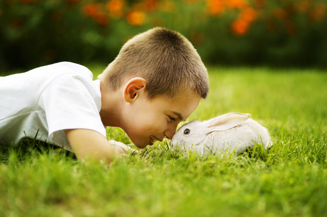 little boy with rabbit