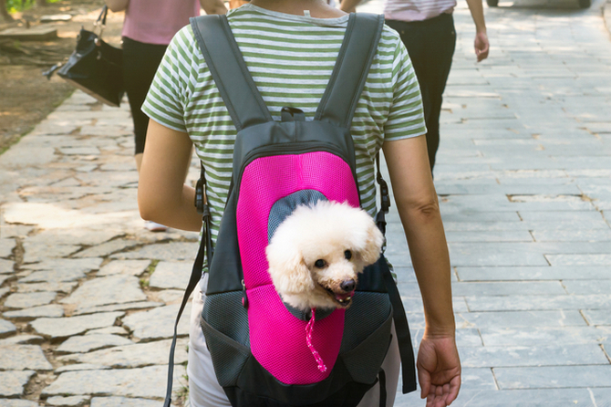 cute dog peeking from carrying