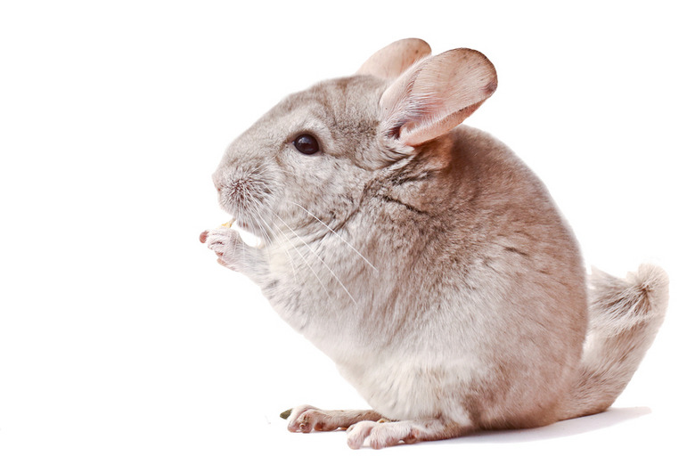 Beige Chinchilla