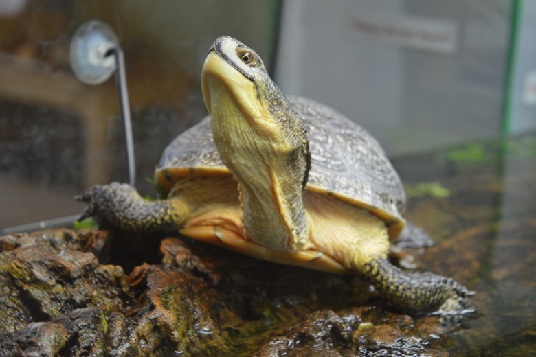Top 10 Best Turtle Tanks For 2019 Pet Comments