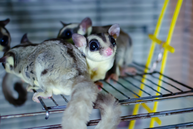 The 10 Best Cages for Sugar Glider Pet | Pet Comments