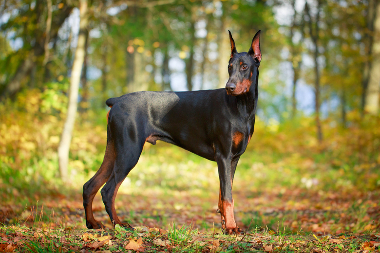 Best Dog Breed For Hot Weather Pet Comments