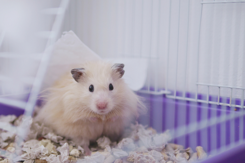 small hamster sitting cage