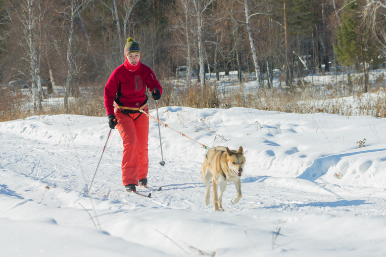 https://petcomments.com/media/p/190/dog-skijoring-sport.jpg