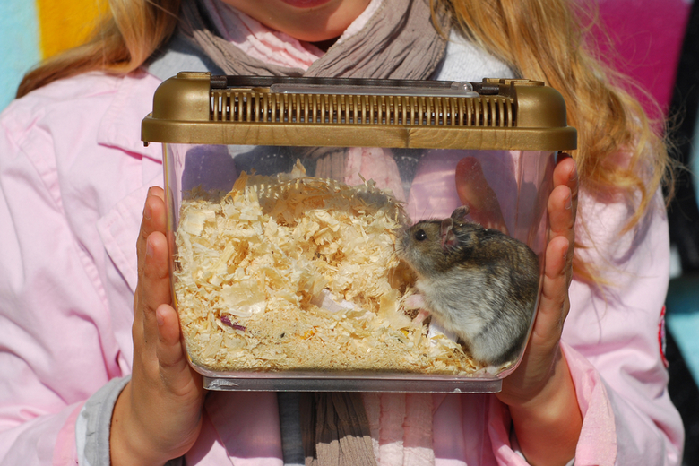 best hamster travel cage