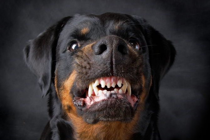 Top 23 Dogs with the Strongest Bite | Pet Comments