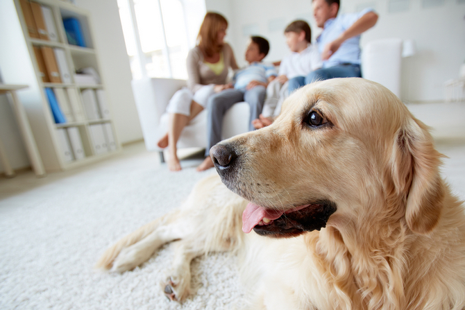 can humans get worms from dogs pet comments
