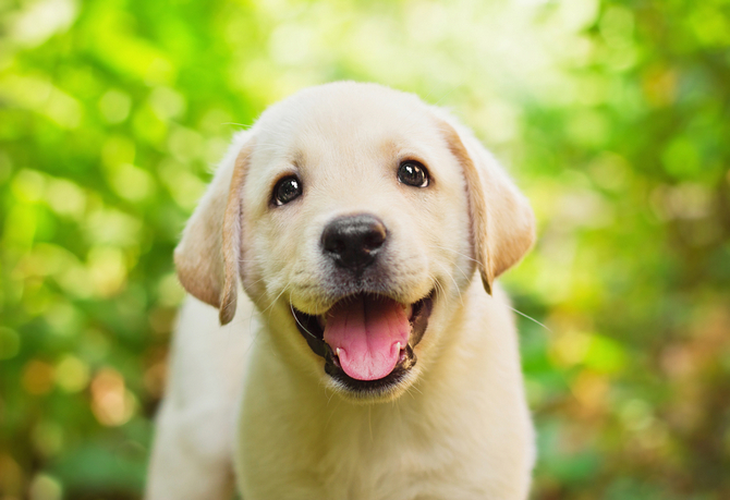 16 Ways To Make Your Dog Happy Pet Comments